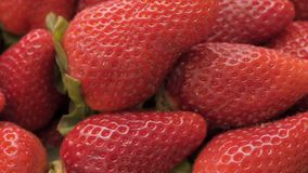 Dolly shot over ripe strawberries, close-up stock footage