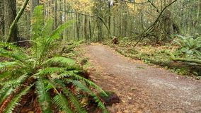 Dolly shot Pacific Northwest Rainforest Trail stock video footage