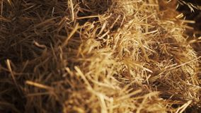 Dolly shot of a pile of straw. Close up of straw inside of a barn - dolly shot stock video