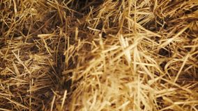Dolly shot of a pile of straw stock footage