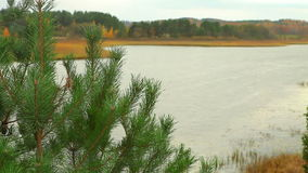 Dolly shot of pine tree with lake stock video