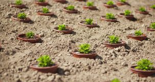 Potted plants growing on field in summer. Dolly shot of potted plants growing on field during sunny day stock footage