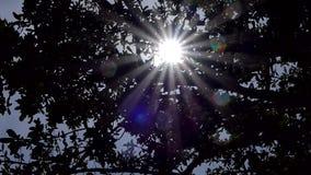 Dolly shot of radiant sunlight breaking through trees.