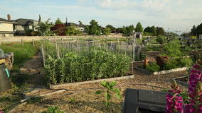 Dolly shot Residential Community Garden stock video footage