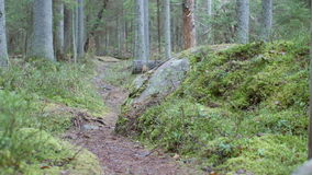 Dolly shot revealing a large rock on a mossy forest floor on a hiking trail stock video