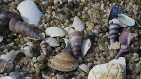 A dolly shot of seashells. On a beach stock video footage
