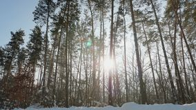 Warm sunbeams illuminating forest in winter