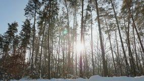 Warm sunbeams illuminating forest in winter stock footage