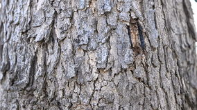Dolly slider close up zoom in wood bark. Of tree stock video footage