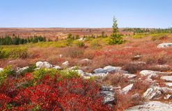 Dolly Sods imagens de stock royalty free