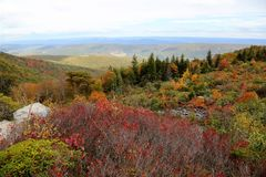 Dolly Sods West Virginia imagem de stock royalty free