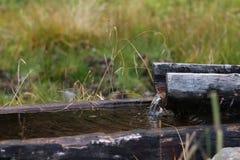 Dolly-ton Oude houten trog zwitserland stock afbeeldingen