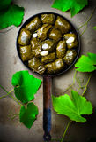 Dolma from grape leaves. Royalty Free Stock Images