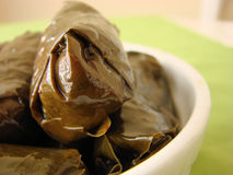 Dolmades stuffed vine leaves Stock Photography
