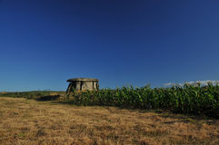 Dolmen and corn Stock Images