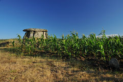 Dolmen and field of corn Stock Photography