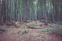 Dolmen in the forest Stock Photography