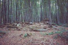 Dolmen nella foresta Fotografia Stock