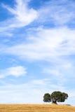 Dolmenmittelmeerlandschaft lizenzfreie stockbilder