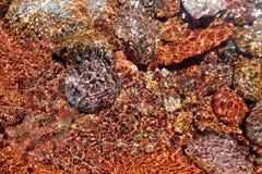 dolna czerwonej rzeki skał strumienia przezroczystości woda Obrazy Stock
