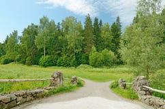 dolny lasu krajobrazu lato w górę widok Zdjęcie Stock