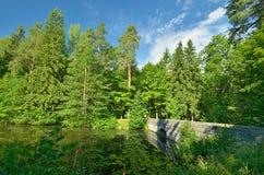 dolny lasu krajobrazu lato w górę widok Obrazy Stock