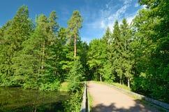 dolny lasu krajobrazu lato w górę widok Zdjęcie Royalty Free