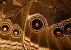 dolny motyli morpho strony skrzydło Fotografia Royalty Free