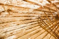 Dolny widok stary parasol obraz stock