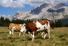 Dolomiet: De Erfenis van Unesco Royalty-vrije Stock Fotografie