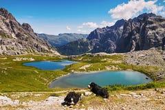 Dolomietlandschap met honden Stock Foto's