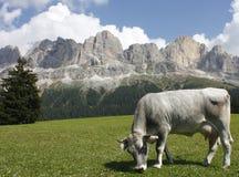 Dolomit: Rosengarten Gruppe Lizenzfreie Stockfotos