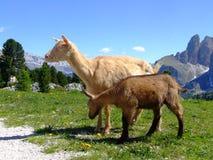 Dolomites Imagem de Stock Royalty Free