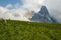 Dolomites Alps, South Tyrol, Italy. Cimon della Pala or Cimone with clouds in the Pale di San Martino Group. Stock Images