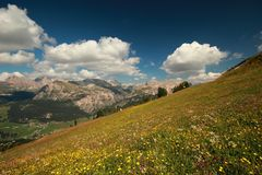 Dolomites - Blooming Meadow Royalty Free Stock Photo