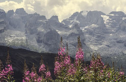 Dolomites of Brenta Stock Images