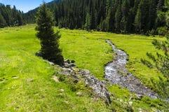 Dolomites de Lienz - Áustria fotografia de stock