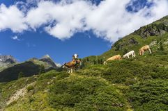 Dolomites de Lienz - Áustria fotos de stock royalty free