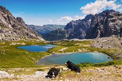 Dolomites landscape with dogs Stock Photos