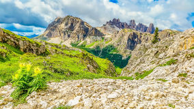 Dolomites Mountains and blooming flowers Royalty Free Stock Photos