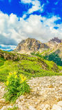 Dolomites mountains with blooming flowers, Italy Royalty Free Stock Image