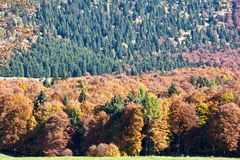 Forest trees with rainbow colors Royalty Free Stock Photos
