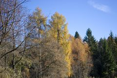The varied colors of autumn trees Royalty Free Stock Photos