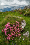 Dolomites Mountains, by Paternkofel, Italy stock photography