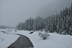 Dolomites river and forest. River flowing through a forest during a snowfall Stock Photography