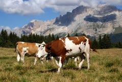 Dolomites Valles: wonderful lanscape Royalty Free Stock Photography