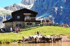 Dolomiteskor och sjö Arkivfoto