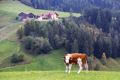 Dolomitgebirgslandschaft Stockfoto