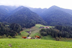 Dolomitgebirgslandschaft stockbild