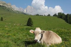 Dolomiti阿尔卑斯威尼托意大利 库存照片